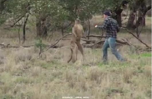 فيديو طريف لكنغر يصارع كلب ثم ينقده صاحبه