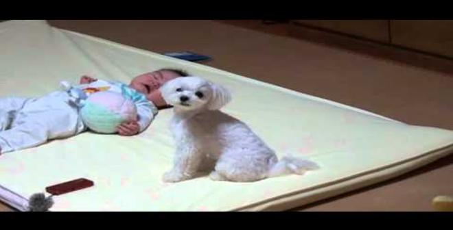 شاهد ردة فعل الكلب عندما يبدأ الصغير بالبكاء!
