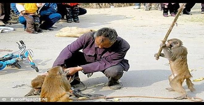 أكثر المواقف المضحكة فى العالم للحيوانات مع الانسان