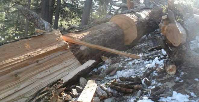نقص الخشب يقلق سكان منطقة تيقاجوين