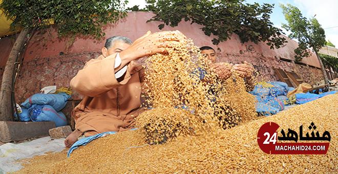 المغرب يسعى لشراء القمح اللين من مناشئ الاتحاد الأوروبي وأمريكا