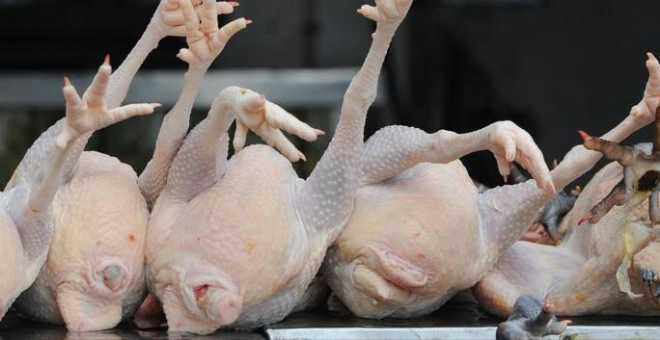 خطير.. حوالي 15 ألف وحدة بالمملكة ''تذبح'' الدجاج دون مراقبة