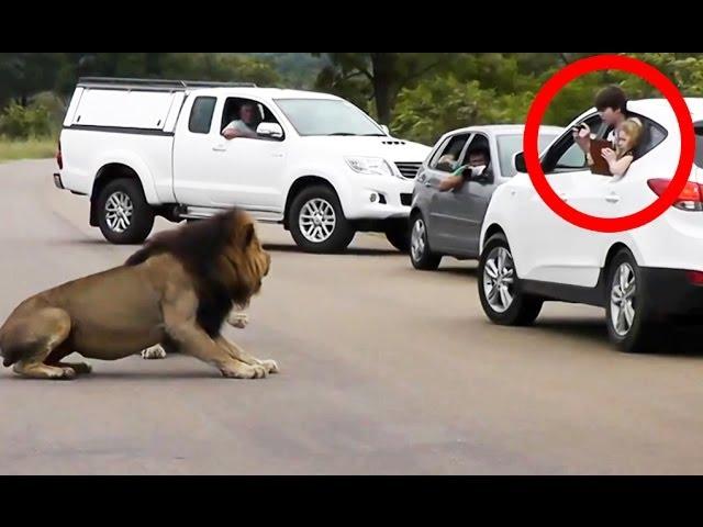 بالفيديو...آسد يهاجم السياح بالطريق السيار