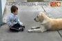 فيديو ابكى العالم .... الكلب والطفل المعاق ذهنيا
