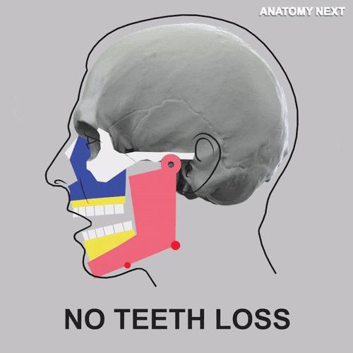 هذا ما يحدث عند فقدان الأسنان
