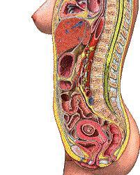 مراحل تطوّر الجنين داخل رحم الأم في 3 ثوان