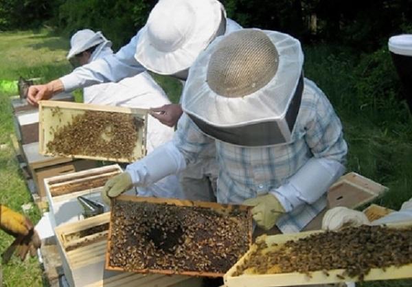 مربو  النحل مغاربة يستفيدون من تجارب هولندا