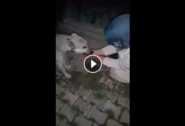 إمرأة سقت كلب كان عطشان حدا نافورة الماء. شاهدوا ردة فعل الكلب