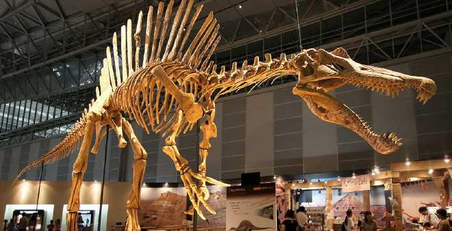 المغرب مطالب بدفع مبلغ كبير لاستعادة هيكل ديناصور يعود لـ 66 مليون عام