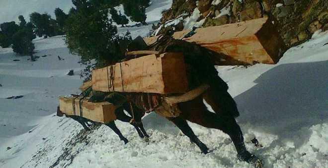 تهريب الخشب من غابة تونفيت يؤجج غضب السكان