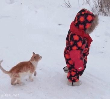 عقل القطط