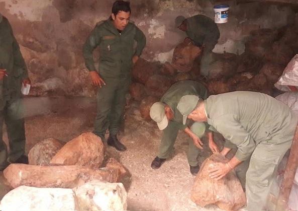 حجز 194 قطعة خشب العرعار الأخضر مخبأة في مخزن بالصويرة
