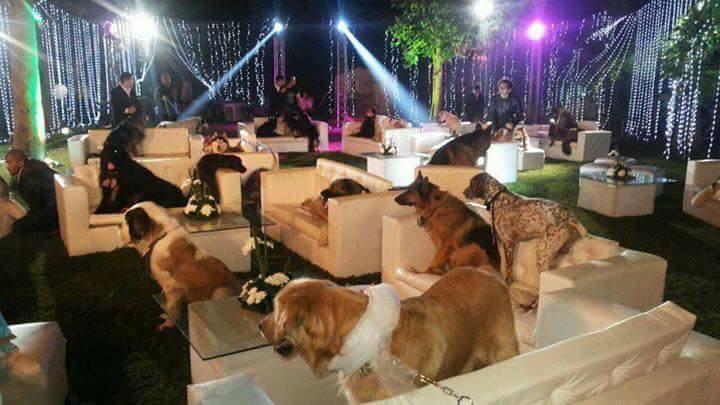 بالصور أغرب حفل زفاف في مصر معازيمه كلها من الكلاب فقط