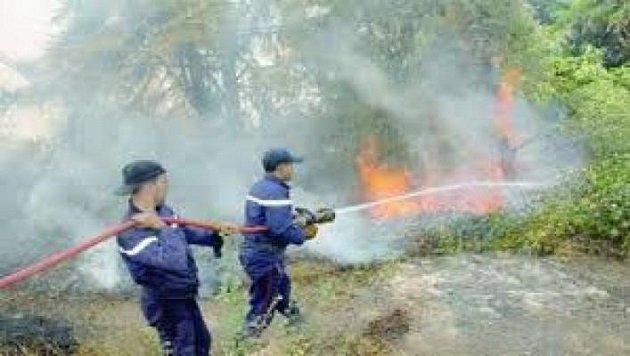 تاونات.. تدابير احترازية لحماية الغابات من الحرائق