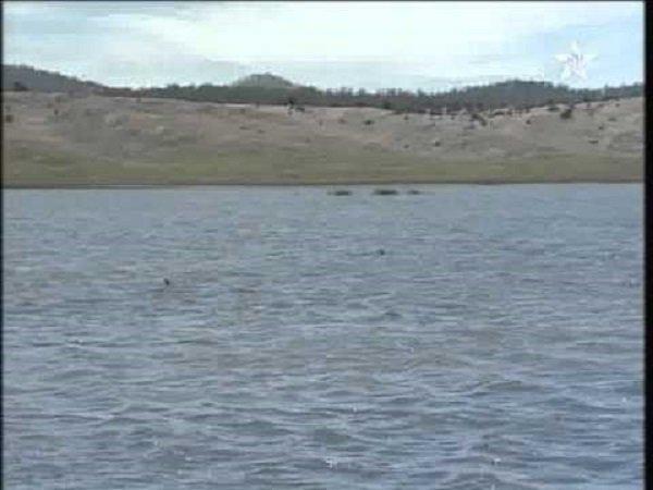 استزراع 180 ألف من الأسماك الصغيرة في إقليم إفران