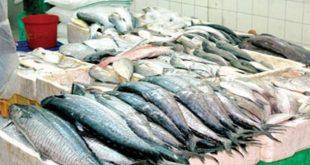الثروات السمكية في البحر الأبيض المتوسط تعرف تراجعا كبيرا