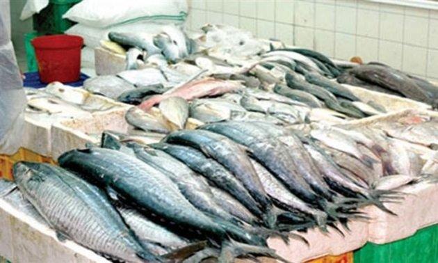 تقرير أوروبي ينبه من اختفاء الأسماك في البحر المتوسط