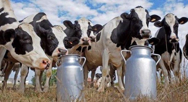 زيادة إنتاج الحليب ترفع من نسبة استهلاكه