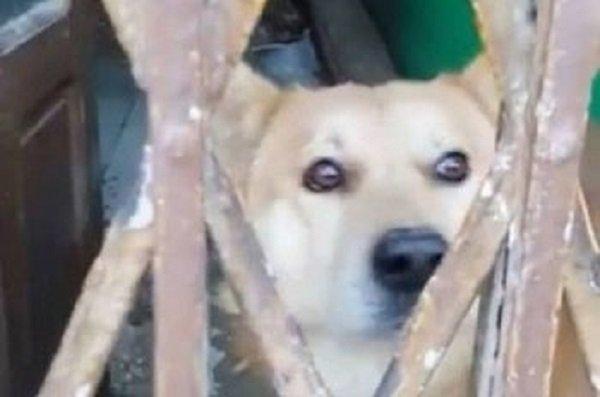 مكناس.. نهاية مأساة الكلب