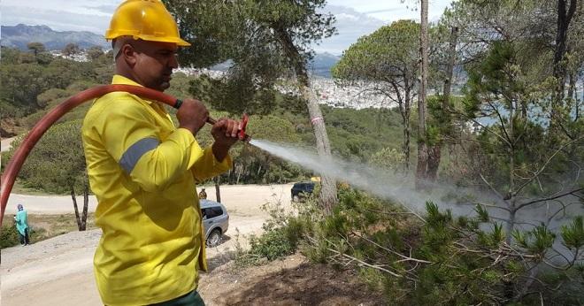 انخفاض نسبة حرائق الغابات بسبب التدابير  الوقائية