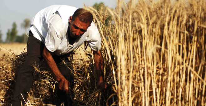 الحكومة ترفع رسم الاستيراد المفروض على القمح وتصادق على مشروع جديد