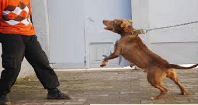الخميسات: الأمن يستعمل السلاح الوظيفي لإيقاف شخص يستعمل كلبا شرسا
