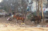 الدار البيضاء.. اسطبلات للبهائم والدواب تثير غضب سكان إقامة النهضة بسيدي مومن