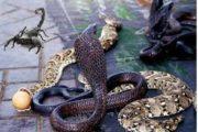 جمعية مغربية تدق ناقوس الخطر:  العقارب والأفاعي والحشرات تقتل