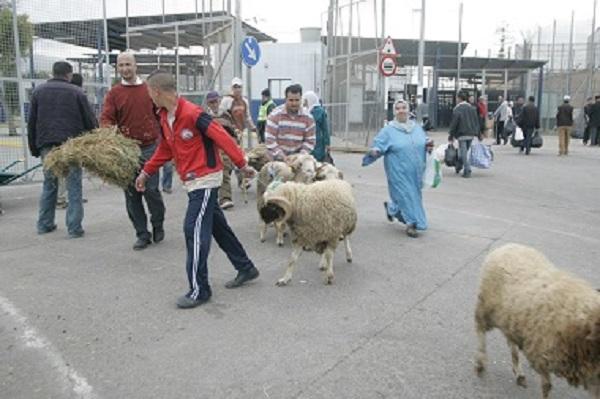 مسلمو سبتة ومليلية سيضحون بأكباش مغربية