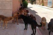 مقاضاة مجلس بلدي بسبب قتل كلبة