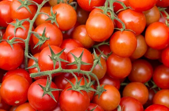 مجموعة عالمية تضع عينها على طماطم وعنب المغرب لتسويق منتجاتها