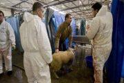 القضاء البلجيكي يقر بحق المسلمين في الذبح على الطريقة الإسلامية