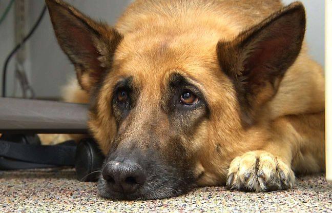 فرنسا: 6 أشهر سجنا لشخص عنف كلبه !