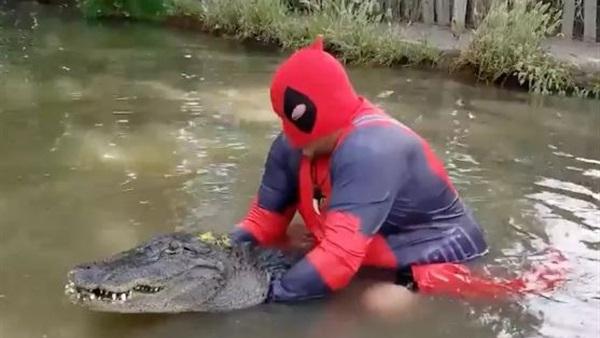 بالفيديو.. مصارع متهور يواجه تمساحاً في بركة مياه
