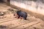 فيديو مرعب للحظة انقضاض دب جائع على شاب سقط في قفصه !!