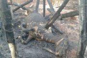 بالصور.. حريق مهول يلتهم المواشي والدواجن والأشجار ببني ملال