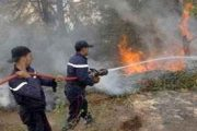 إقليم شفشاون.. حريق يأتي على حوالي 150 هكتارا من غابة جبل خربوش