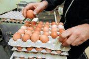 اليوم العالمي للبيض..  140 بيضة لكل مغربي في السنة