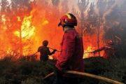 النيران تواصل التهام الغابات الإيطالية والسلطات تجلي سكان المدن القريبة