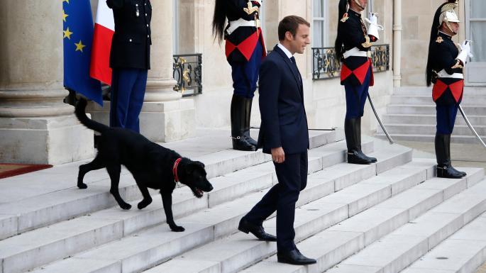 بالفيديو.. فعل فاضح لكلب الرئيس الفرنسي خلال اجتماع في الإليزيه