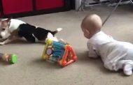 فيديو طريف.. كلب يعلم طفلا صغيرا الحبو