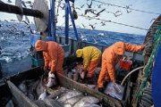 وزير دانماركي يؤكد نفعية اتفاقية الصيد البحري على الصحراء المغربية