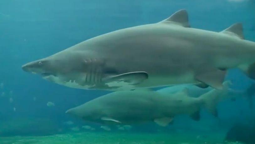 بالفيديو.. فتاة تتعرض لهجوم من سمكة قرش