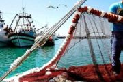 رغم كورونا.. انتاجية قطاعا الفلاحة و الصيد البحري تواصلت