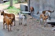 بعد تعرض بعض المواطنين لهجمات... حملة للتصدي للحيوانات الضالة