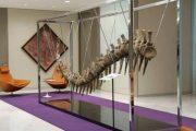 ذيل ديناصور من المغرب في المزاد العلني لإنقاذ التعليم بالمكسيك