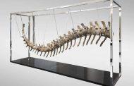 الكشف عن معطيات جديدة حول ذيل ديناصور مغربي بيع بالمكسيك