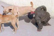 الداخلية تنفي إقدام شخص على شرب الحليب من ثدي كلبة بتيزنيت