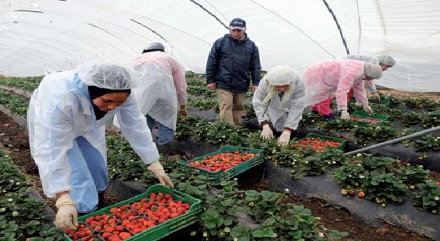 الأنابيك تنفي شراكتها مع أي جمعية لتسجيل عاملات الفراولة إلى اسبانيا