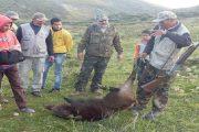 عملية قتل الخنازير البرية متواصلة وتافراوت تقضي على 50 منهم.